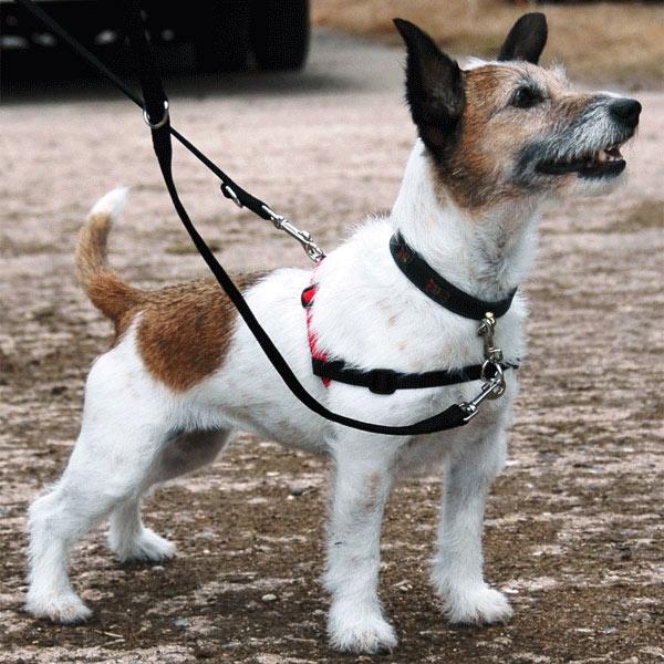 easy walk dog leash instructions