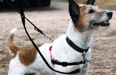 Hundegeschirr Halti Harness