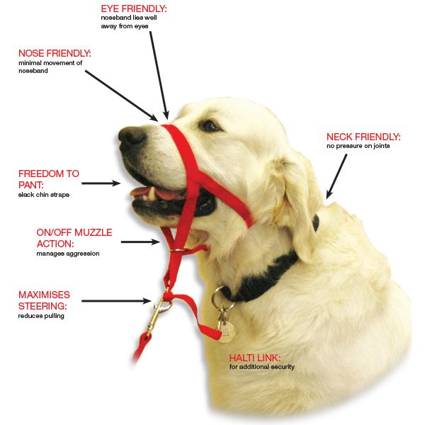 How To Use Dog Training Halter