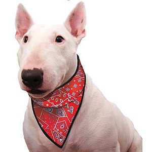 Aqua Coolkeeper Cooling Pet Bandana Red (Restposten)