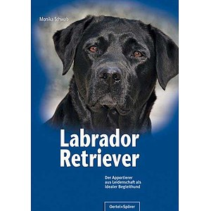 Labrador Retriever - Monika Schwab