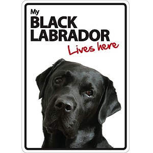 Schild - My Black Labrador lives here